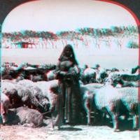 With the Flocks, Eqypt_A.jpg