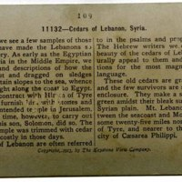 Ceders of Lebanon, Syria_b.jpg